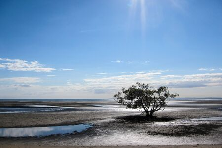 A lone tree under a blue sky surrounded by mudflats with sunflare Stock Photo