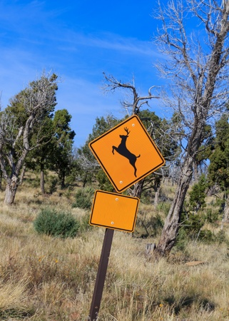 Yellow warning road sign of a deer leaping, warning of wild deer moving across the road   Sign is placed in front of winter trees and grass   The lower rectangle sign has been made blank for your own message  photo