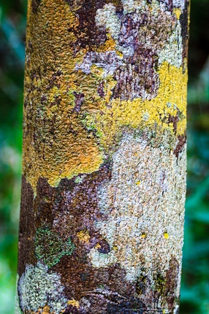 A narrow tree covered in bright yellow and green moss Stock Photo