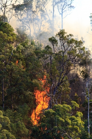 Huge flames roar up the side of a hill in the Australian bush Stock Photo