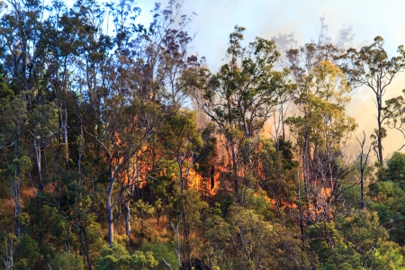 Trees in the Australia bush on fire