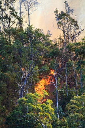 Flames from a fire in the Australian bush burn up a hill, blowing orange smoke into the sky photo