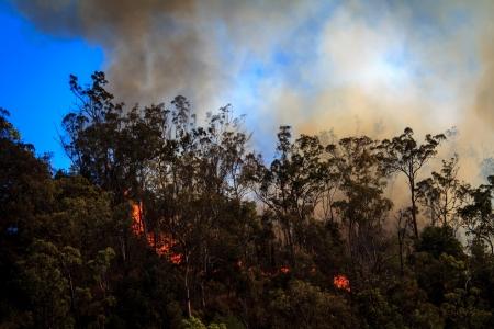 burning bush: Fire burning in the Australian bush