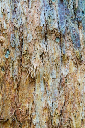 Vertical colorful Australian Paperbark tree bark abstract