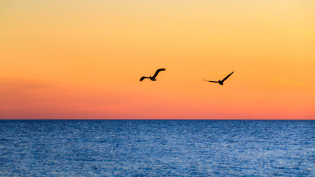 Silhouette of a pair of pelicans flying over the Gulf of Mexico against a warm sunset orange yellow sky