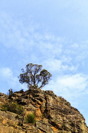 A lone tree high up on the top of a rocky cliff, seen in the Blue Mountains in New South Wales, Australia Stock Photo