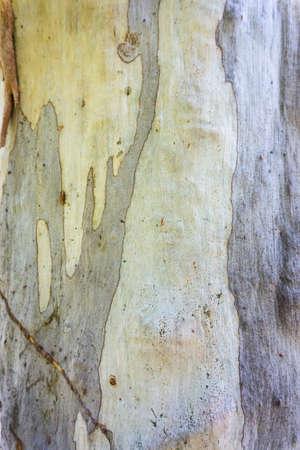 Close-up of pale orange and grey tree bark