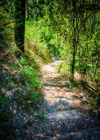 bushwalk: Dirt path with steps winding down through Carnavon Gorge in Queensland, near Wards Canyon