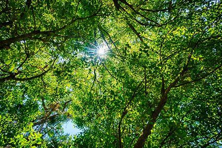 Sole luminoso scoppio attraverso un albero frondoso baldacchino ambientale verde, visto a Carnarvon Gorge, Queensland, Australia. Unfocused