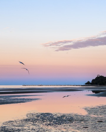 Three seagulls flying in the air.  It is dusk so the sky is pink and purple, and the still water of low tide with tidal pools is also reflecting the pink sky. In the background is a wooden pier.  Taken at Sandgate, Brisbane, Australia