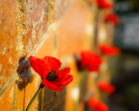 War memorial poppy on a brick wall, lit up by warm early morning sunlight.