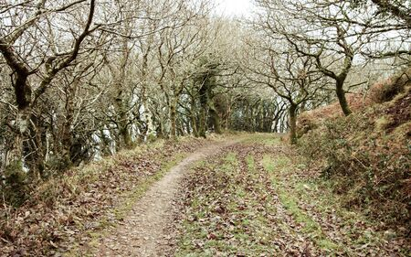 Country road lined with bare winter trees.  Devon, England, UK