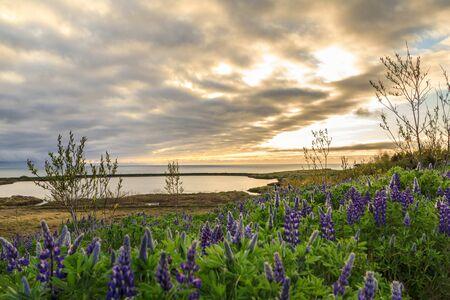 The light cloud turned the near-midnight sun to gold over the Skjalfandi sea near Husavik, in north Iceland.