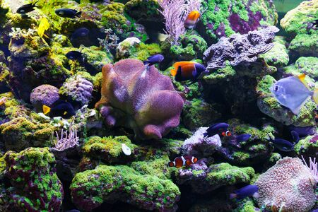 sarcophyton: A flock of fish among beautiful bright coral