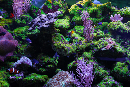 sarcophyton: Beautiful bright coral. Among the corals swim little fishes
