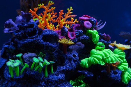 Beautiful multicolored corals under water. Close up