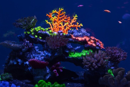 Multicolored bright corals under water close up Stock Photo