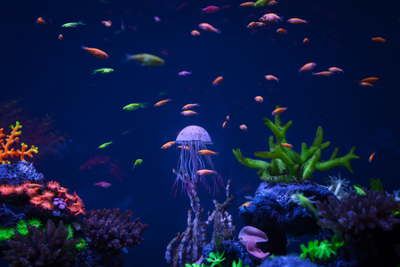 eautiful jellyfish swims under water among coral small fishes and corals