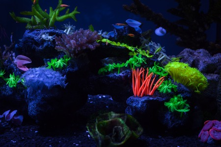 Bright colorful corals on the bottom under the water