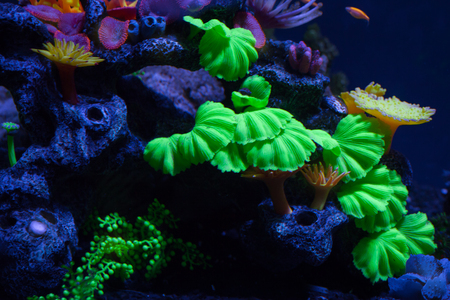 Bright corals on the bottom under the water
