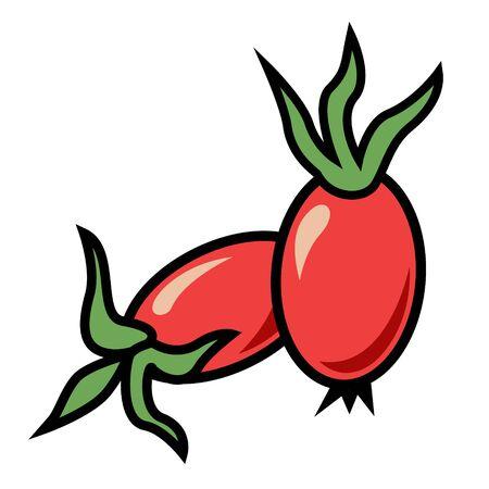 Rosehip berries - immune system activator, natural medicine, source of vitamin C - herbal tea ingredient illustration