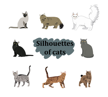 Vector breed cats icons set. Collection different kitten layout flat cover