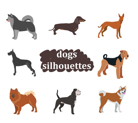 akita: Dogs breed vector set.