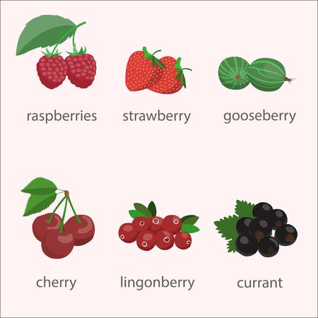 wild strawberry: Vector set of berries. Illustration
