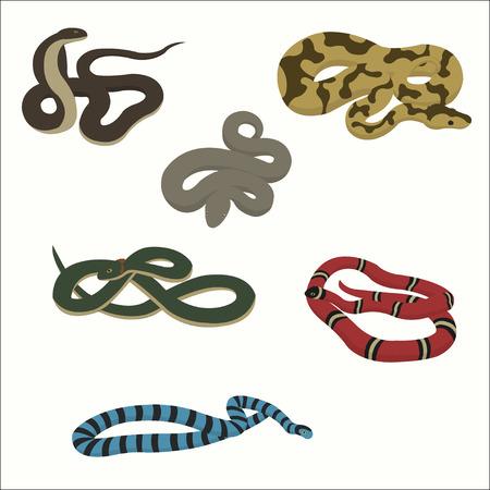 Snake set isolated on white.