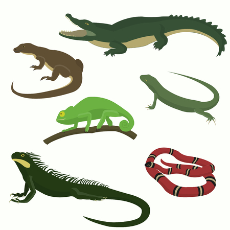 coldblooded: Set of reptiles and amphibians isolated on white background.