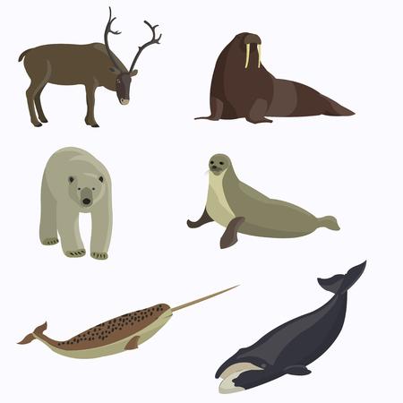 Arctic animals collection. Illustration