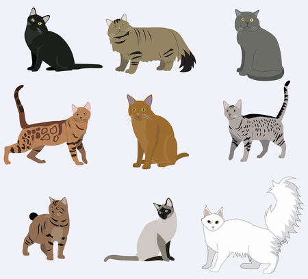 Vector breed cats icons set. Illustration