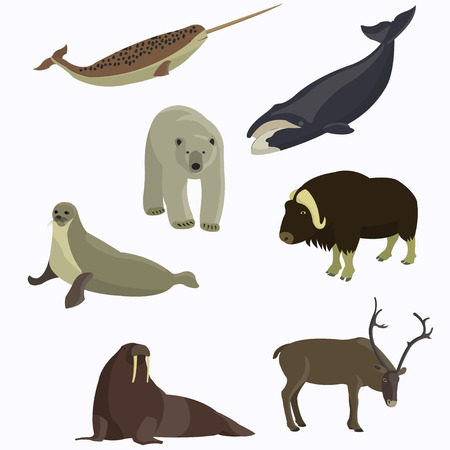 Arctic animals collection. Polar bear, seal, walrus, narwhal, bowhead whale, northern reindeer. Stock Photo