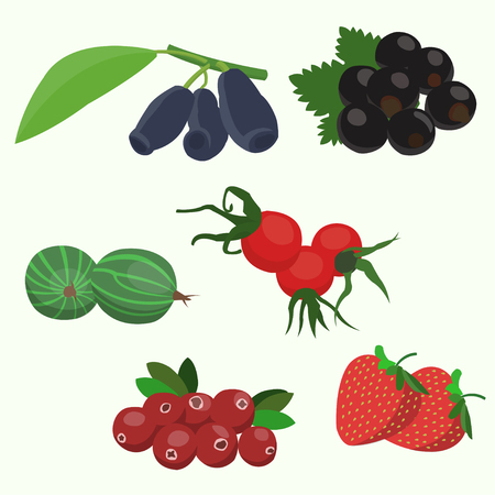 cowberry: A vector illustration of various Forest berries set, isolated on white