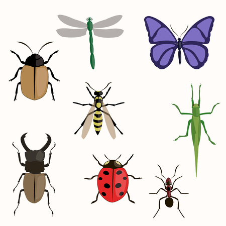 ladybird: Set of various insects design flat. Illustration