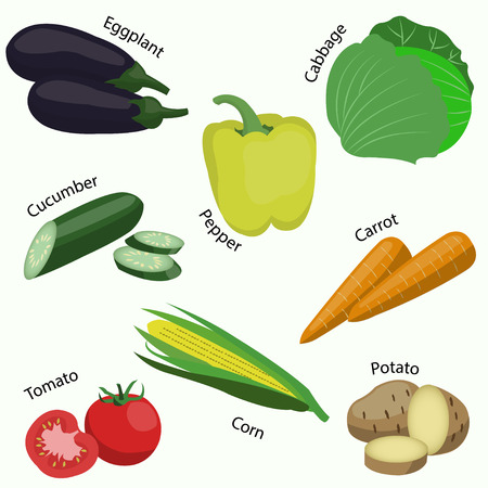 Set of vegetable on white background. Illustration