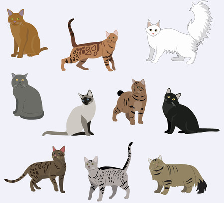 Vector ras katten iconen set. Stockfoto