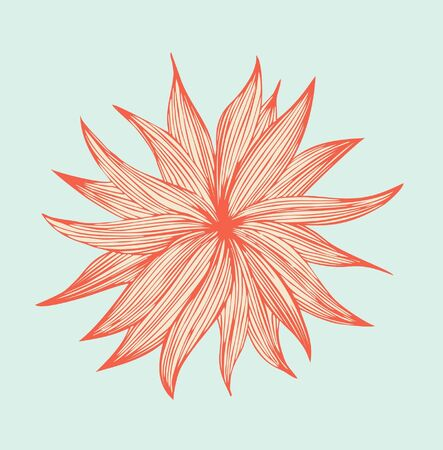 aster: Orange linear isolated flower  Cute floral element for wrappers, covers, cards, textile, prints