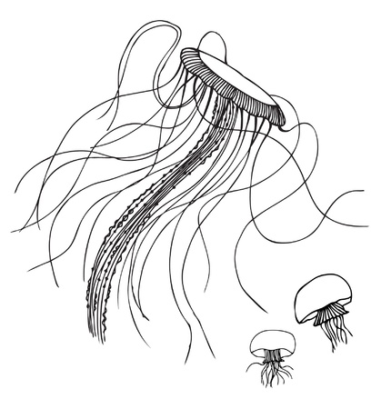 medusa: Linear  isolated jellyfish