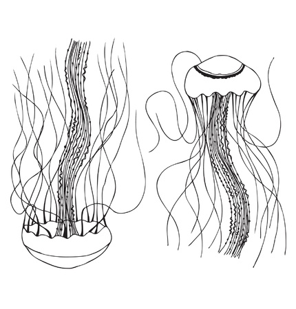 simple life: Couple of linear jellyfishes  Illustration