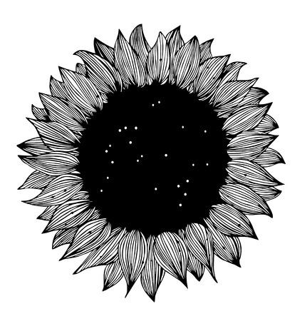 dibujos lineales: La silueta del girasol blanco y negro
