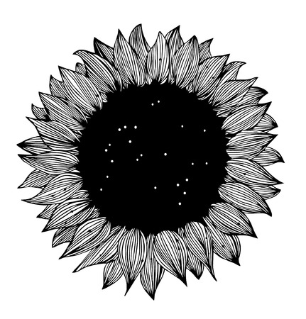 sunflower seeds: Sunflower black and white Silhouette