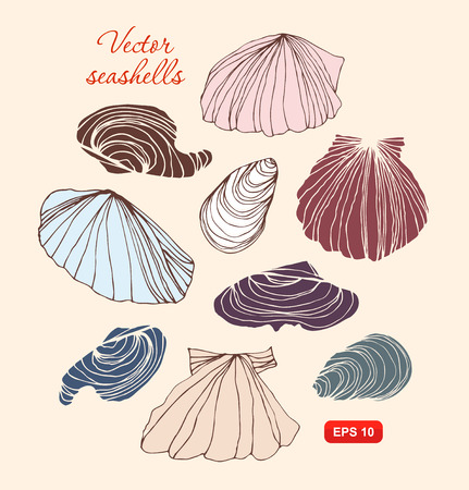 Seashells vector set. Collection of different isolated shells Illustration