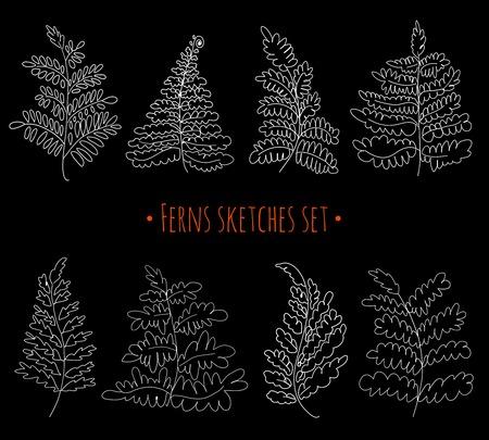 Floral sketches set. Vector ferns collection. Hand drawn botanical illustration. Decorative graphic image