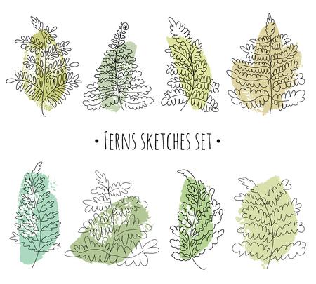 Floral sketches set. Vector ferns collection. Hand drawn botanical illustration