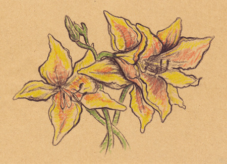 pistil: Vintage sepia yellow lilies sketch craft paper isolated. Stock Photo