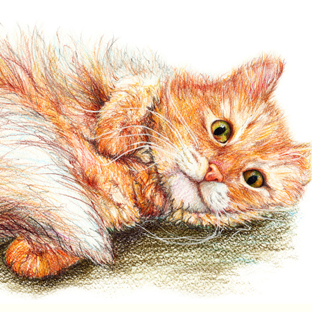 naughty or nice: Cute nice ginger fluffy cat hand drawn art.