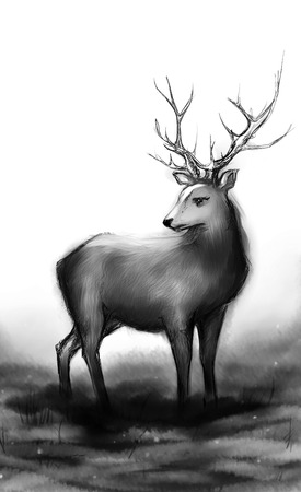 snow forest: Winter snow forest black and white monochrome deer with big horns.