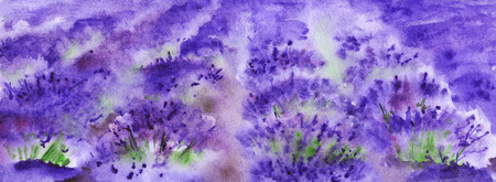 provence: Watercolor lavender fields nature France Provence landscape.