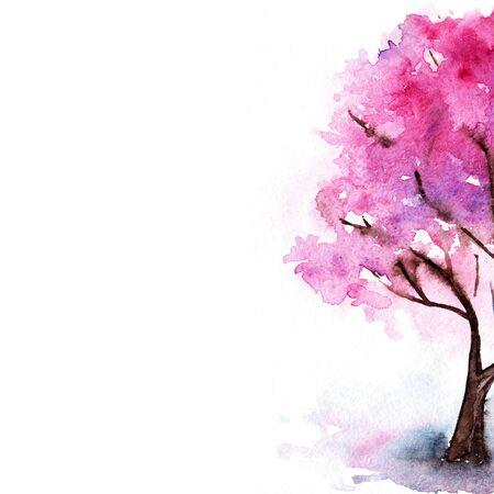sakura tree: Watercolor single pink cherry sakura tree isolated. Stock Photo